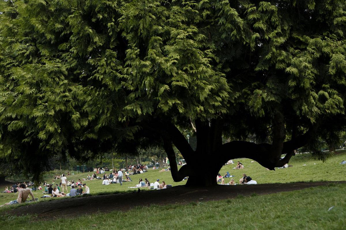 Parc Monceau_arbre