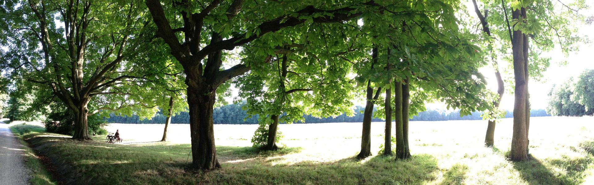 Photographié un jour d'été, le Parc de Noisiel, Noisiel, 08 2013. Ph. Moctar KANE.