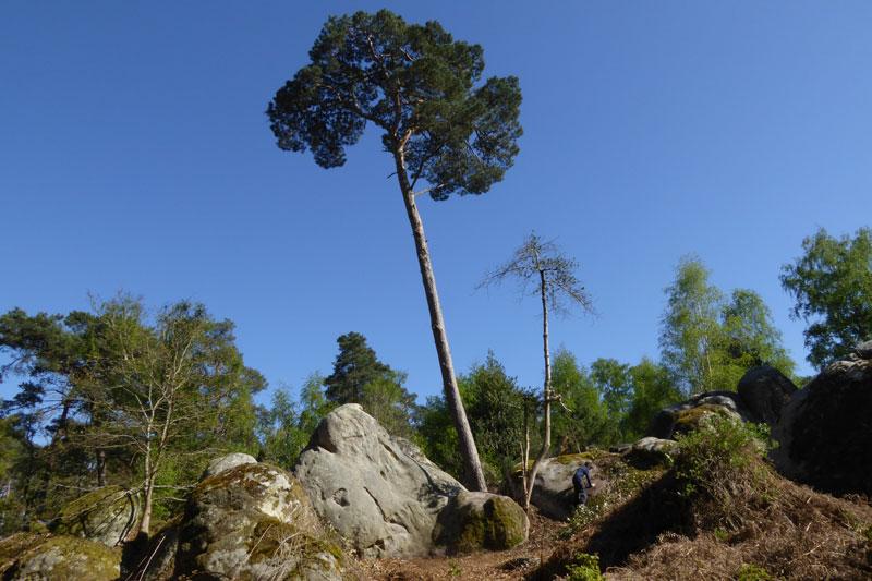 Forêt de Fontainebleau, prise avec le Panasonic TZ60, 04 2014. Ph. Moctar KANE.