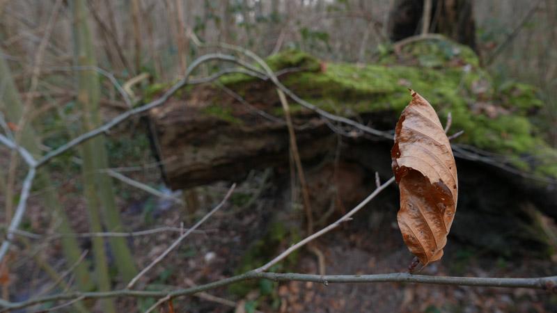 La forêt régionale de Bondy, prise au Panasonic Lumix DMC-LX100, 02 2015, Ph. Moctar KANE.