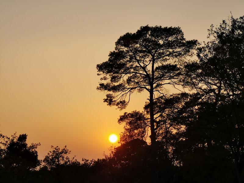 La forêt de Fontainebleau vers le crépuscule, prise au smartphone Huawei Mate20 Pro, 10 2018, Ph. Moctar KANE.