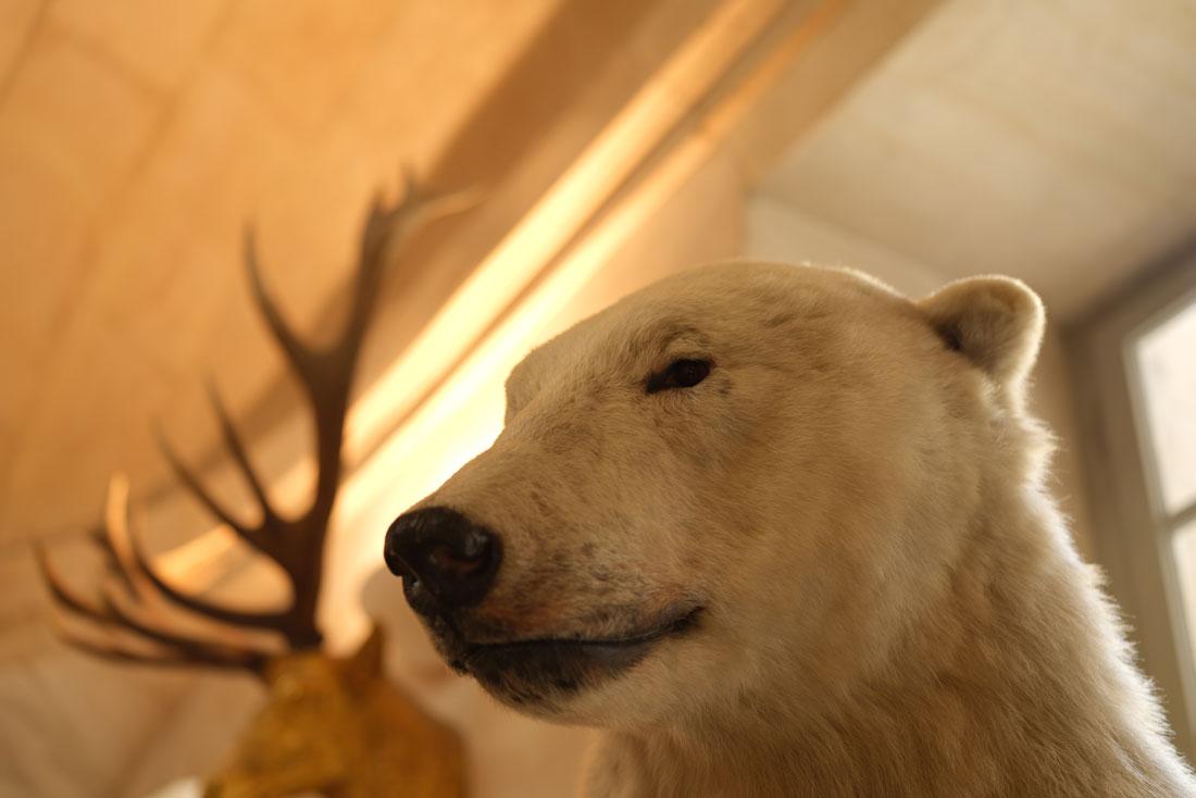 Tête d'ours polaire prise au Fujifilm GFX100, Musée de la chasse, Paris, 2019, Ph. Moctar KANE.