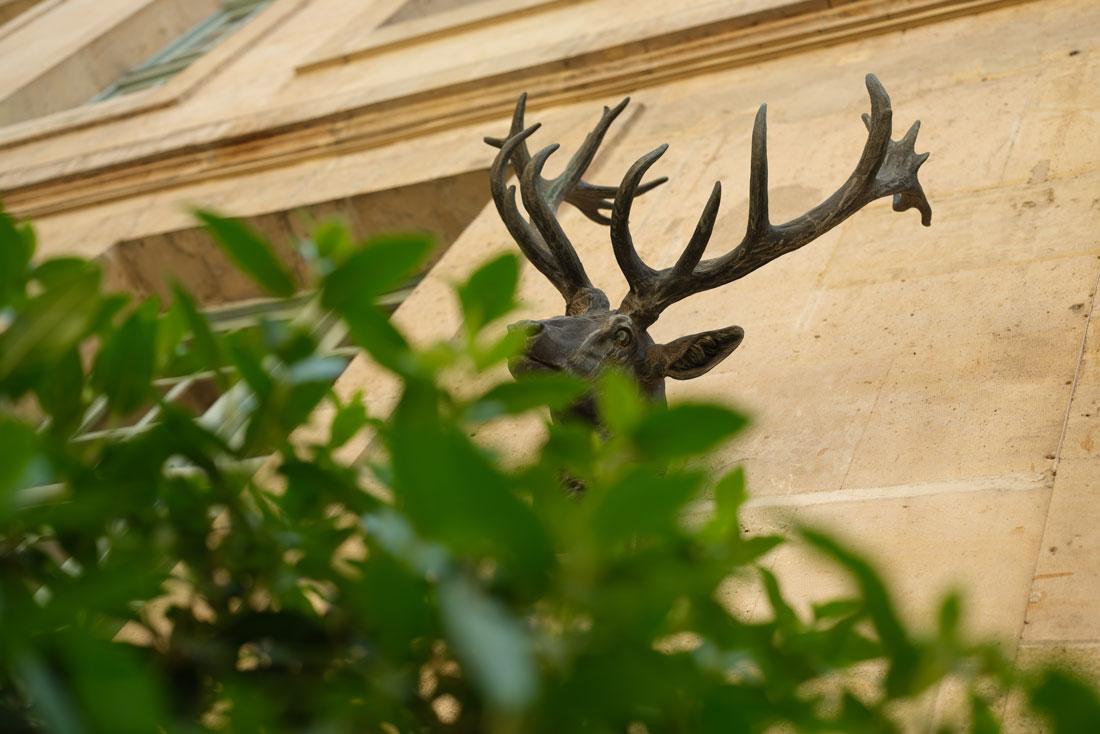 Tête de cerf prise au Fujifilm GFX100, Musée de la chasse, Paris, 2019, Ph. Moctar KANE.